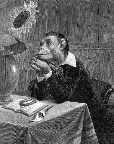 monkeycreative2